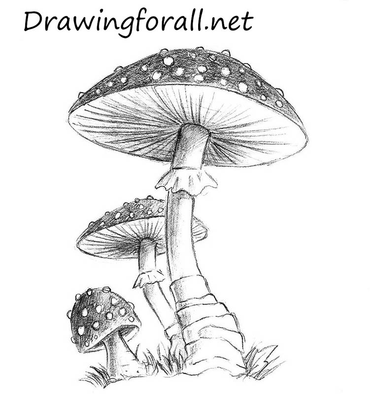 How To Draw A Mushroom Drawingforall Net