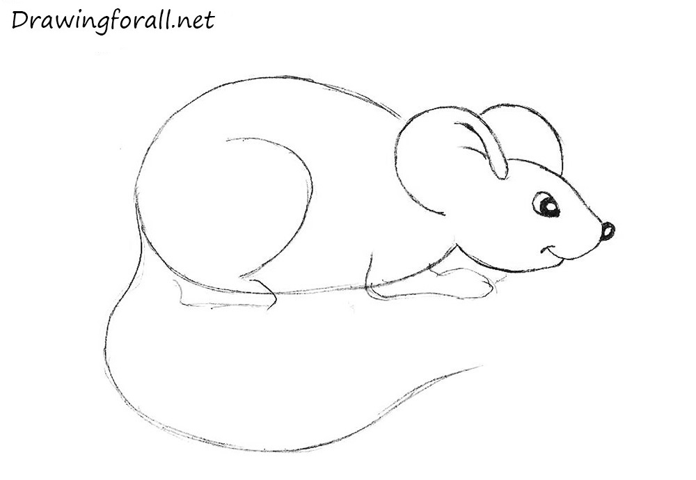how to draw a mouse for beginners with a pencil