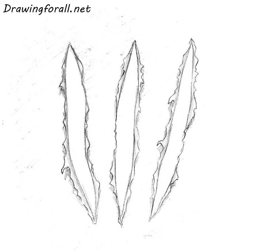 how to draw claw marks