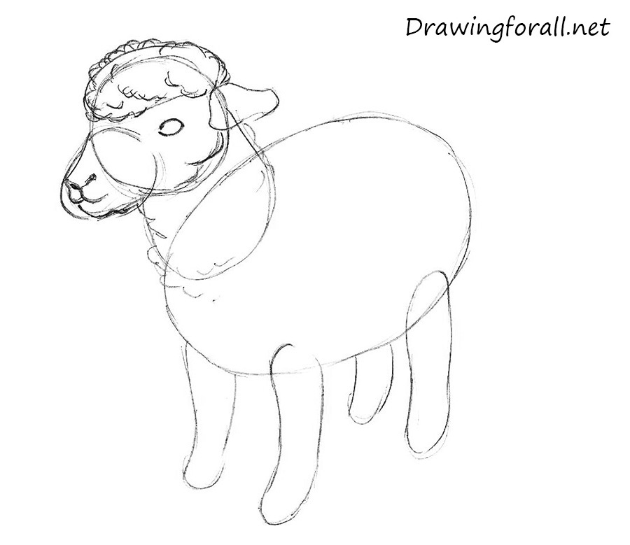 how to draw a sheep for children