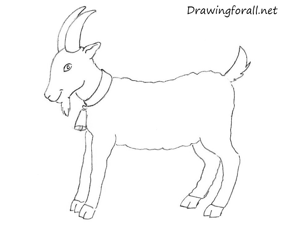 How to Draw a Goat for Beginners | Drawingforall net