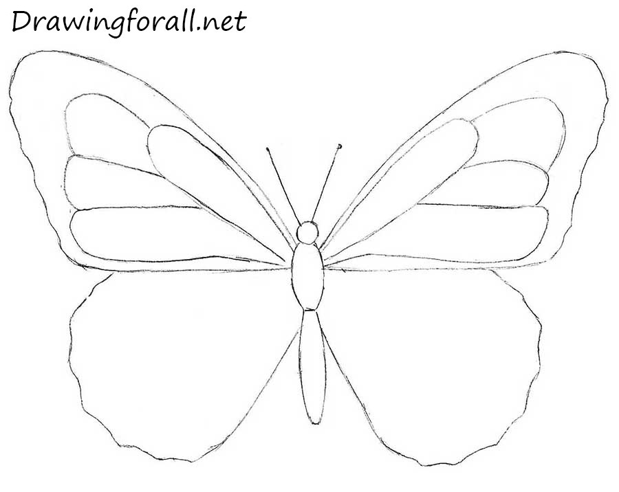 How To Draw A Butterfly For Beginners Drawingforall Net