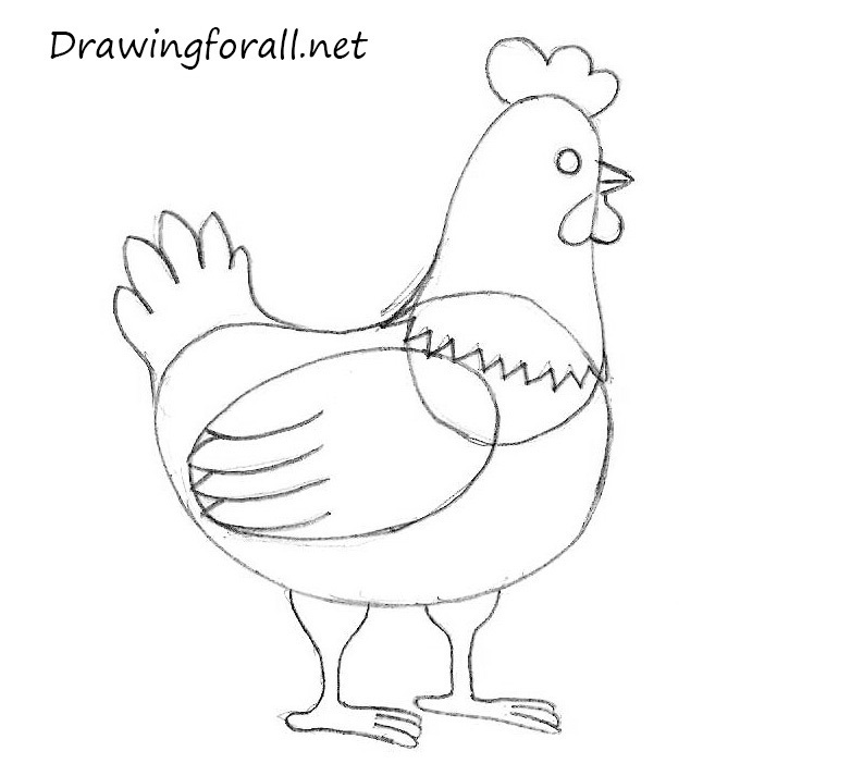 how to draw a chickern easy