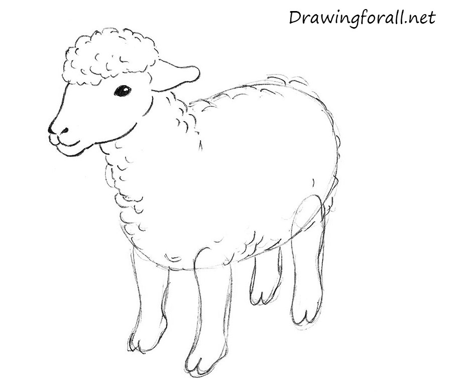 How to draw a sheep - photo#11
