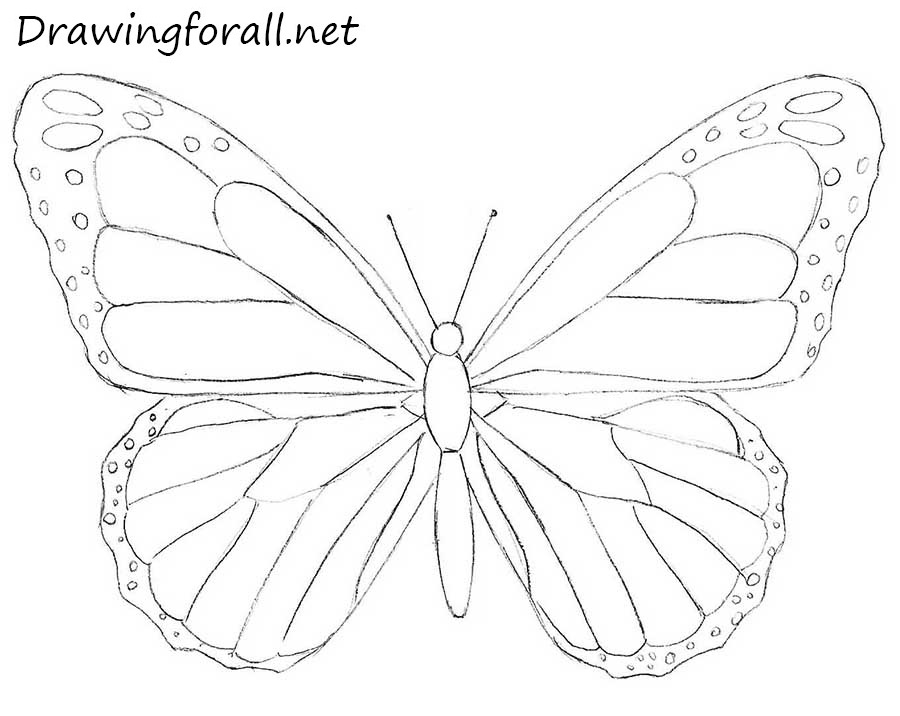 How to Draw a Butterfly for Beginners | DrawingForAll.net
