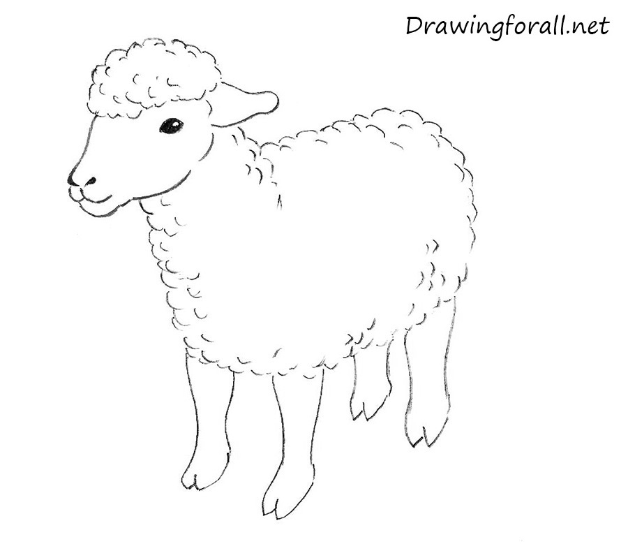 How to draw a sheep - photo#7