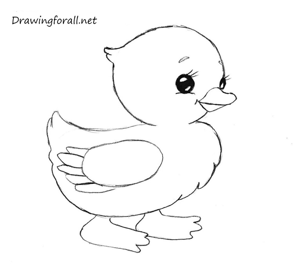how_to_draw_a_chicken