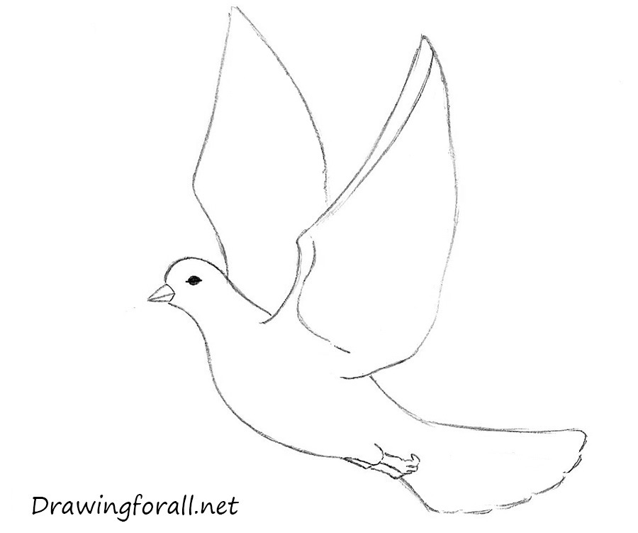 how to draw a dove for beginners step by step