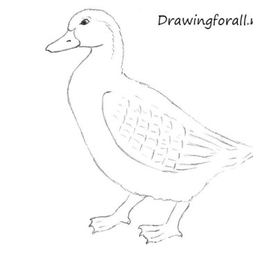 How to Draw a Duck for Beginners