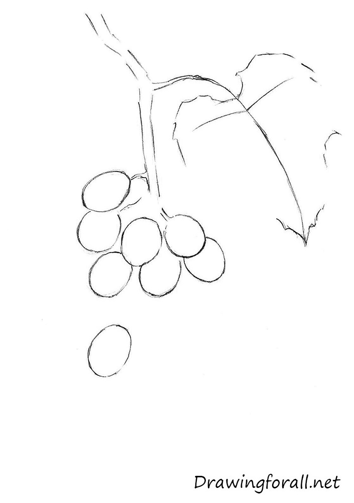how to draw grapes step by step