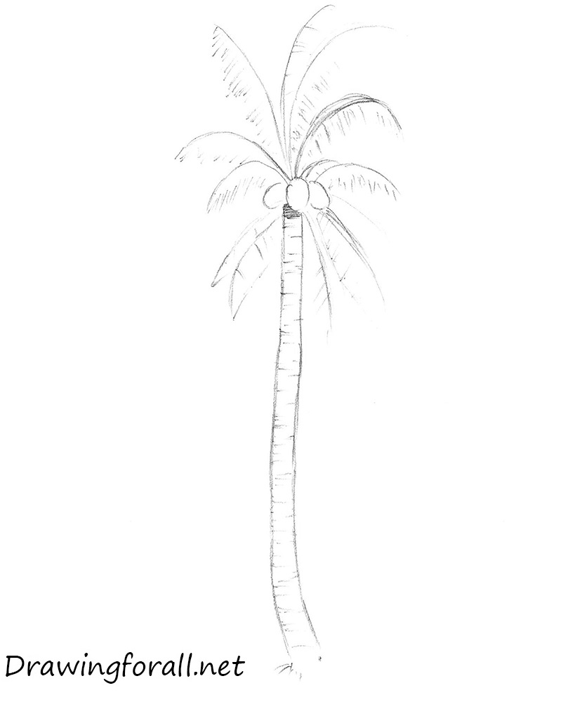 how to draw a palm tree step by step