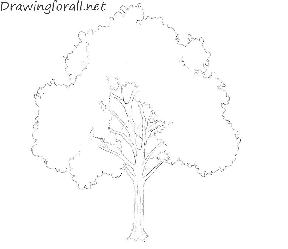 How to Draw a Tree with a pencil