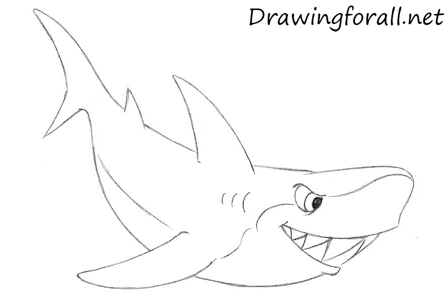 How to draw a cartoon shark