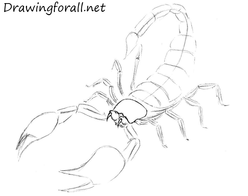 scorpion how to draw