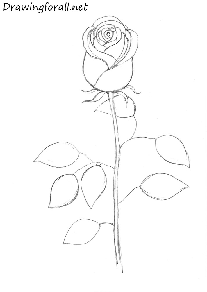 How to draw a rose step by step with pencil