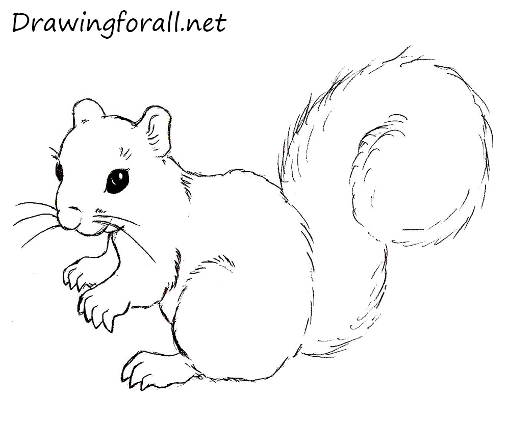 how to draw a squirrel drawingforall net squirrel images clipart black and white Cute Squirrel Clip Art