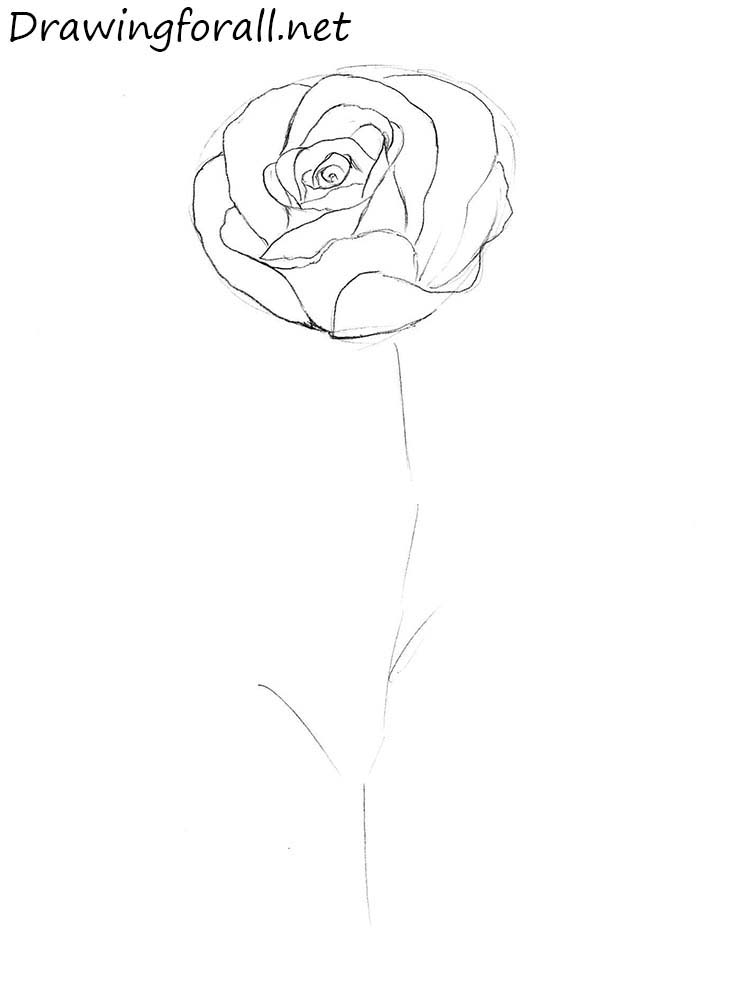Step By Step Diagram Template: How To Draw A Rose Step By Step