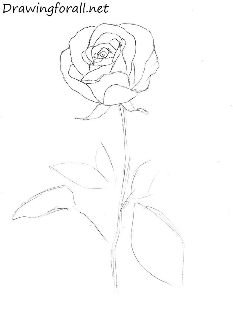 rose drawing tutorial