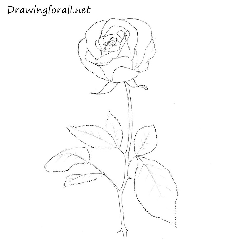 Bud Drawing Outline Wiring Diagrams Manual Cutter For Printed Circuit Board Sunyzcb400 View How To Draw A Rose Step By Drawingforall Net Bus Flower Drawings