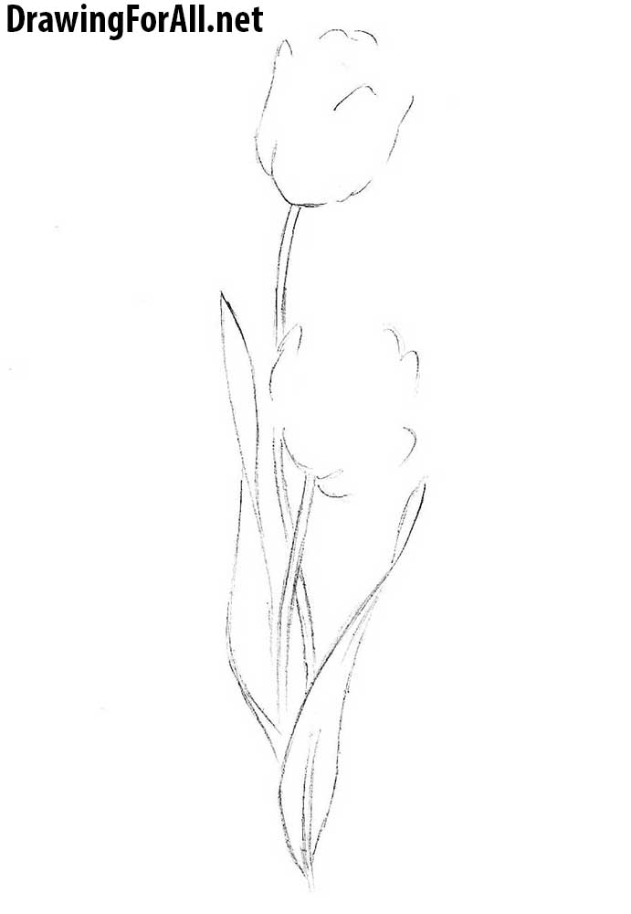 How to Draw a Tulip easy