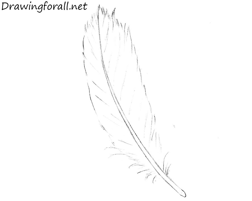 How to Draw a Feather with a pencil