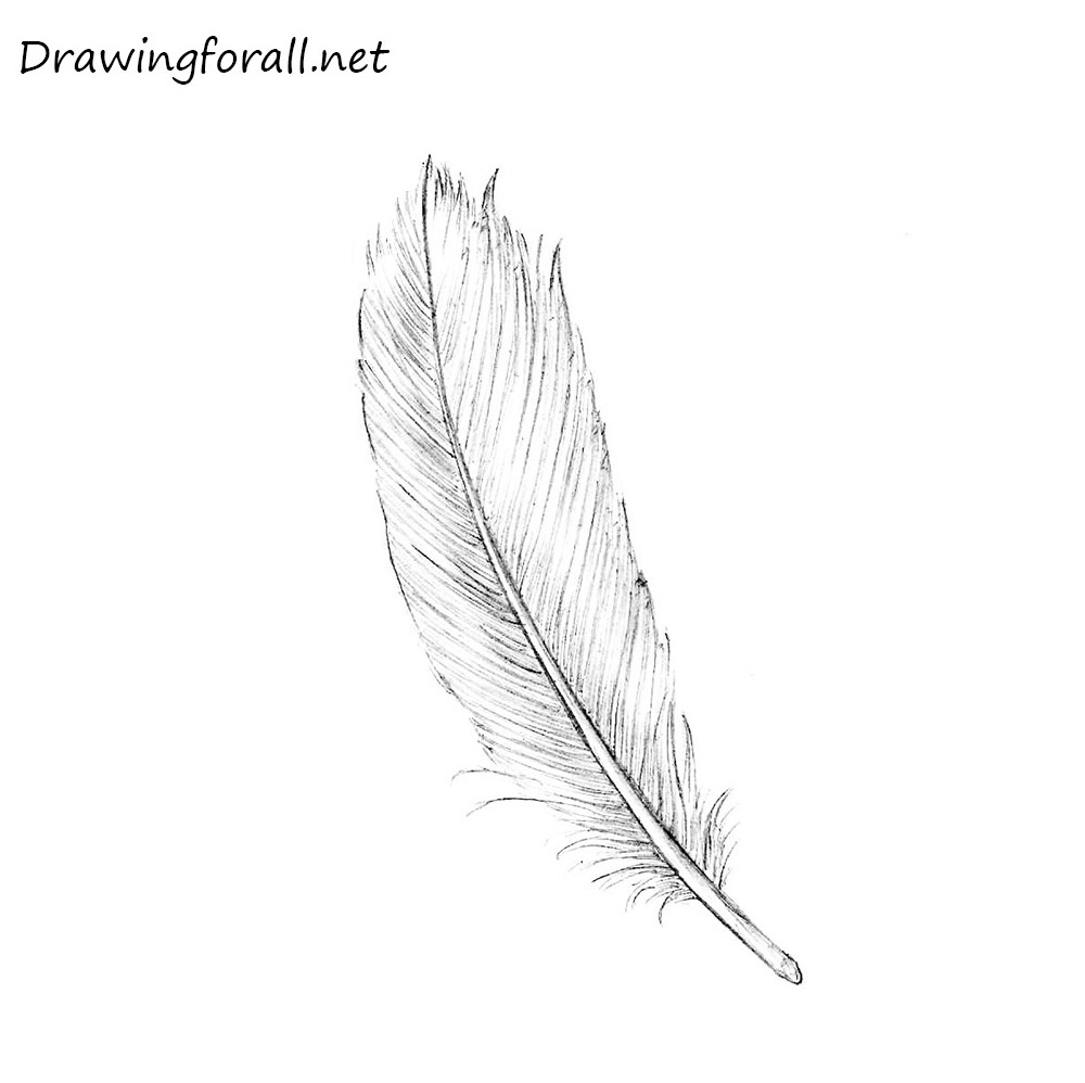 Line Drawing Feather : How to draw a realistic feather drawingforall