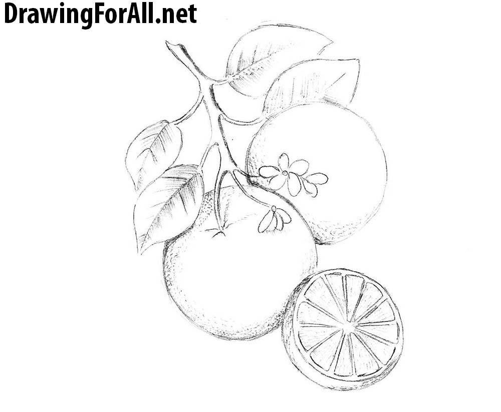 how to draw an orange