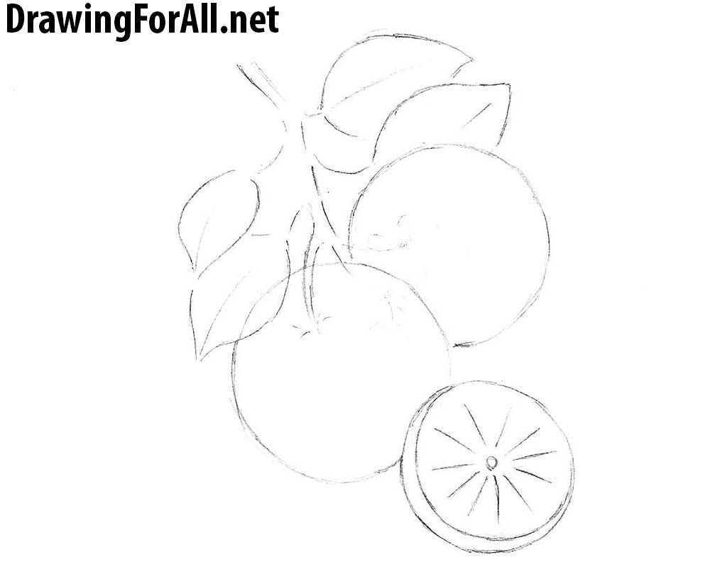 how to draw an orange with a pencil step by step