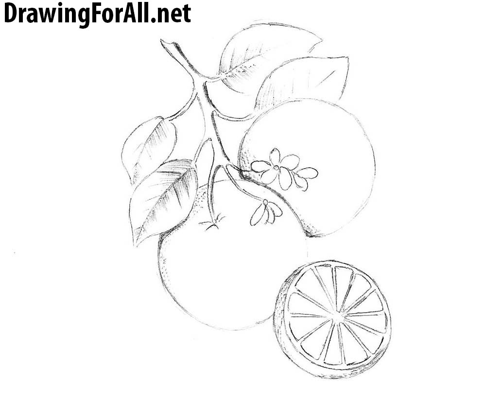 how to draw an orange drawingforall net