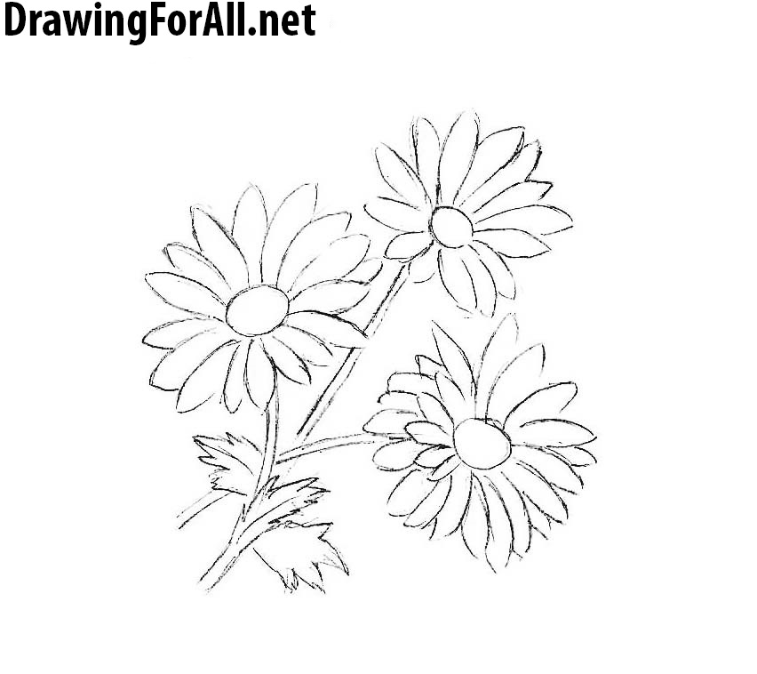 learn how to draw chamomile