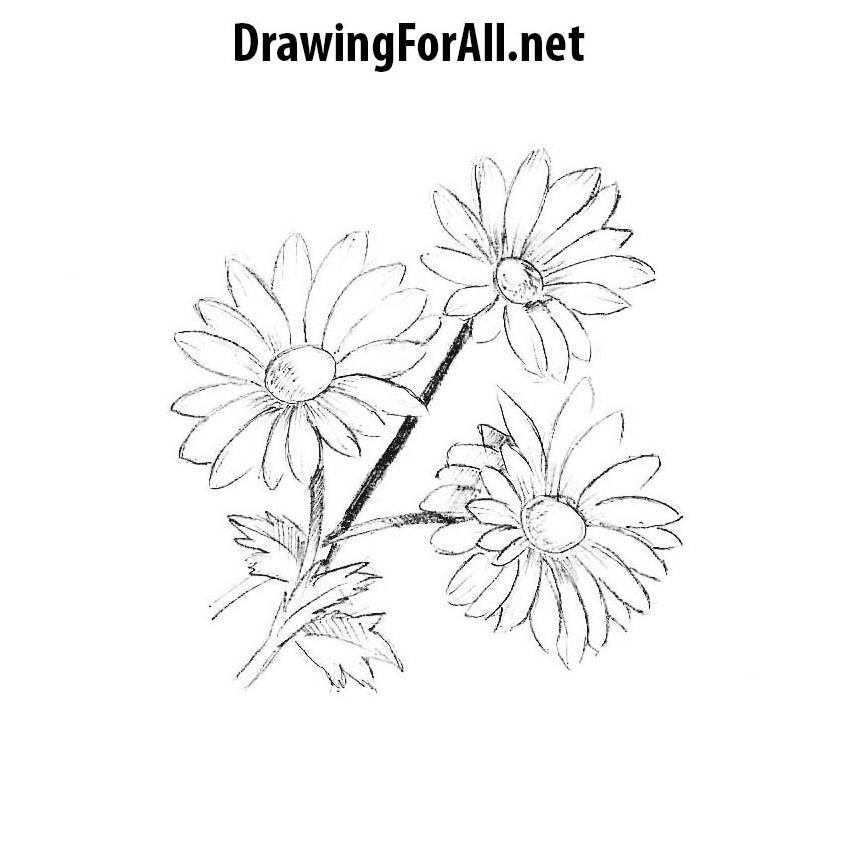 How To Draw Flowers In A Vase Drawingforall