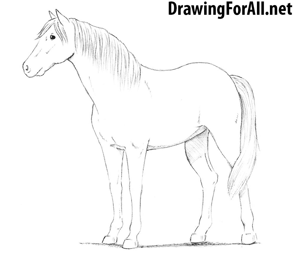 How to Draw a Horse