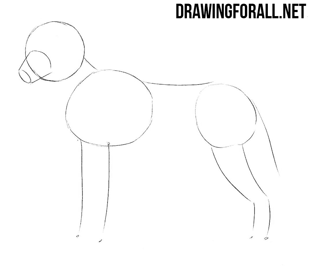 how to draw a wolf