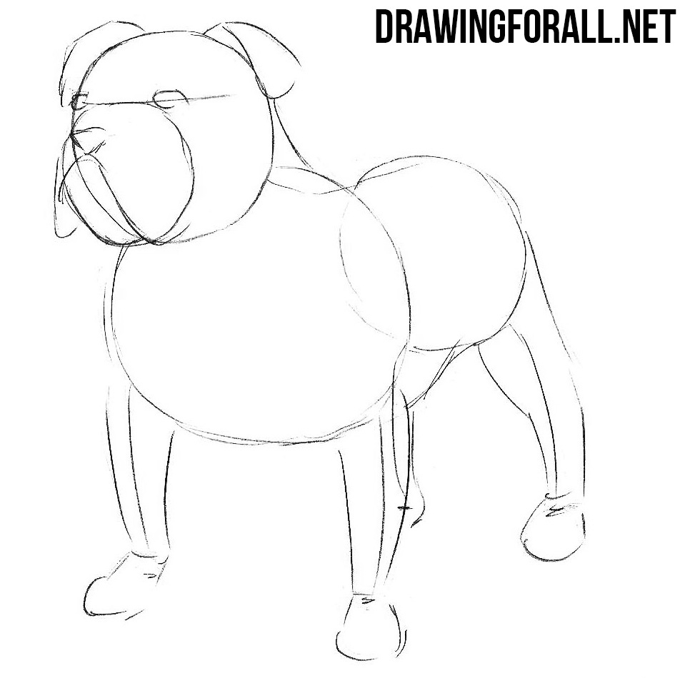 how to draw a bulldog step by step