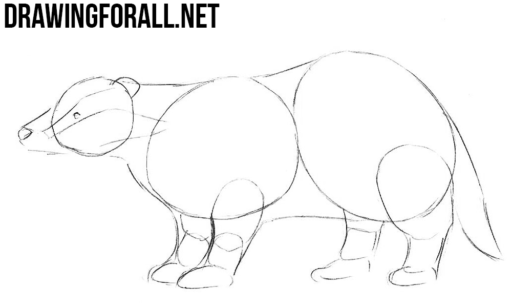 How to Draw a Badger step by step