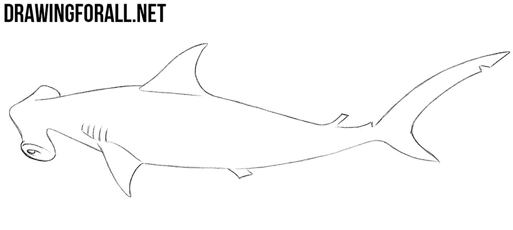 hammerhead shark drawing