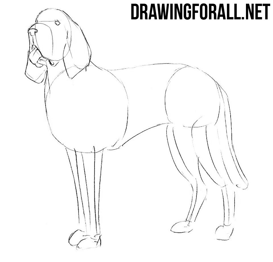 how to draw a Bloodhound