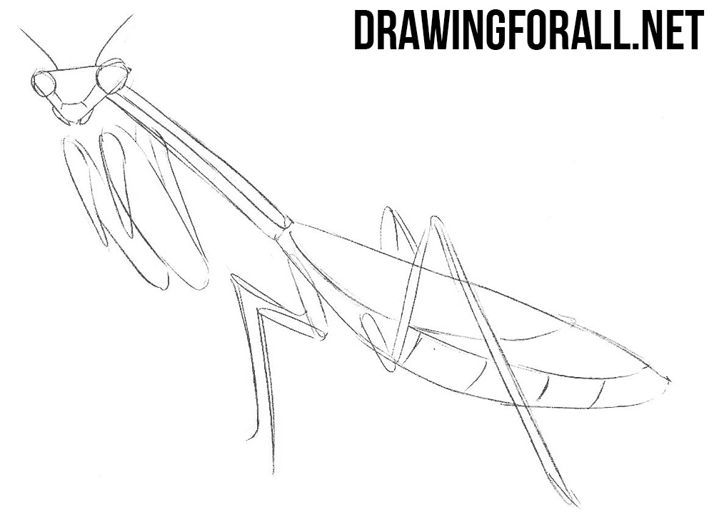 how to draw an insect