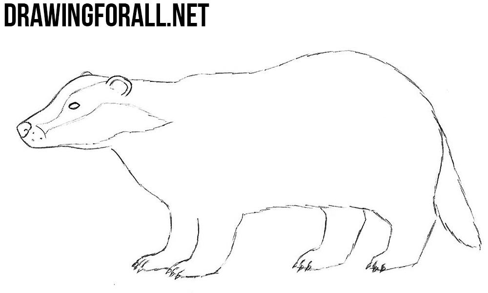 badger drawing