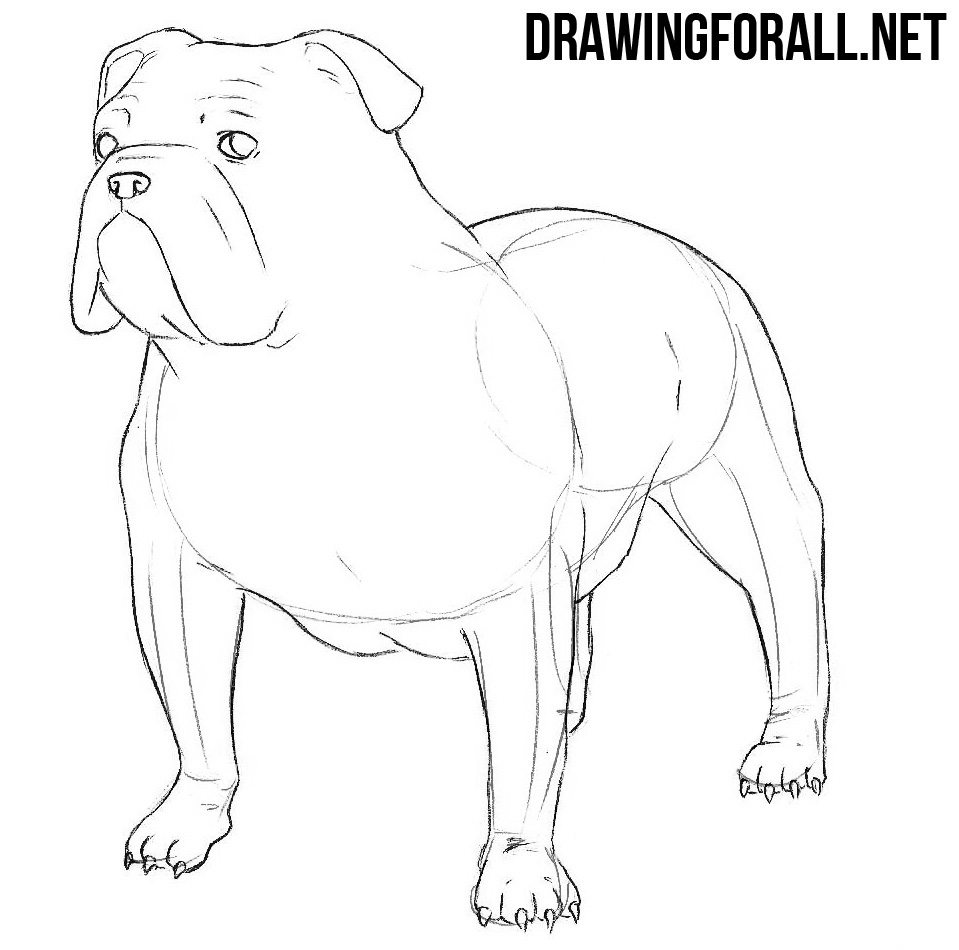how to draw a bulldog with a pencil
