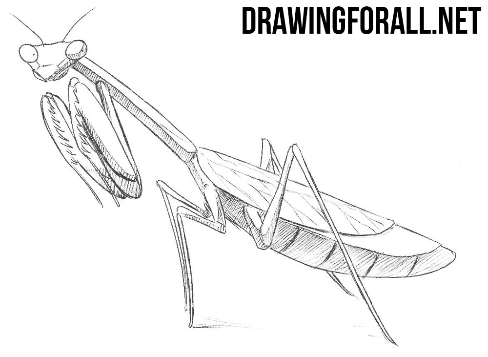 How To Draw A Mantis Drawingforall Net