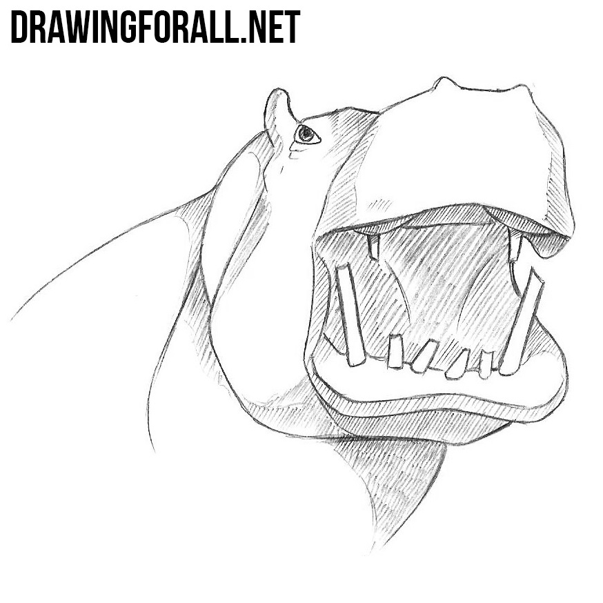 How to Draw a Hippo Head, | DrawingForAll.net