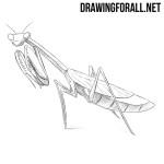 How to Draw a Mantis