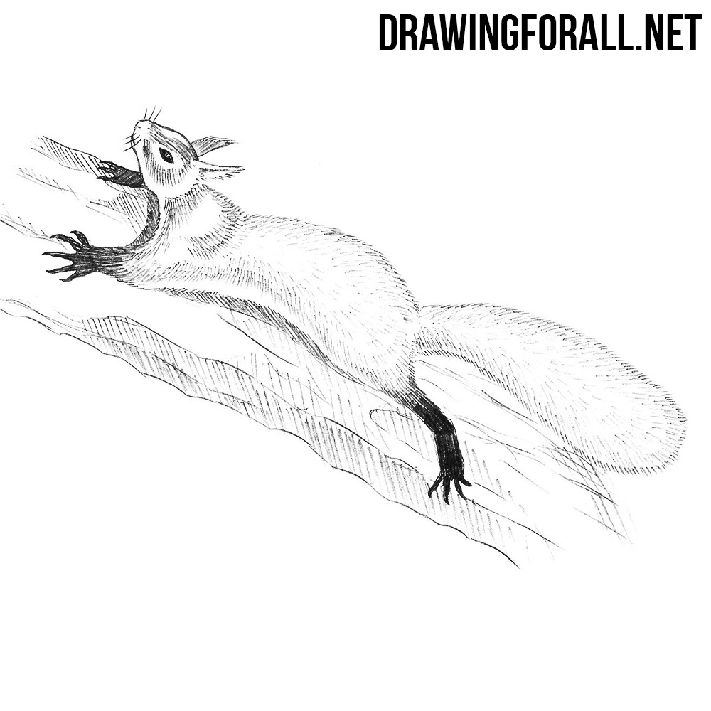 How to Draw a Squirrel Step by Step DrawingForAllnet