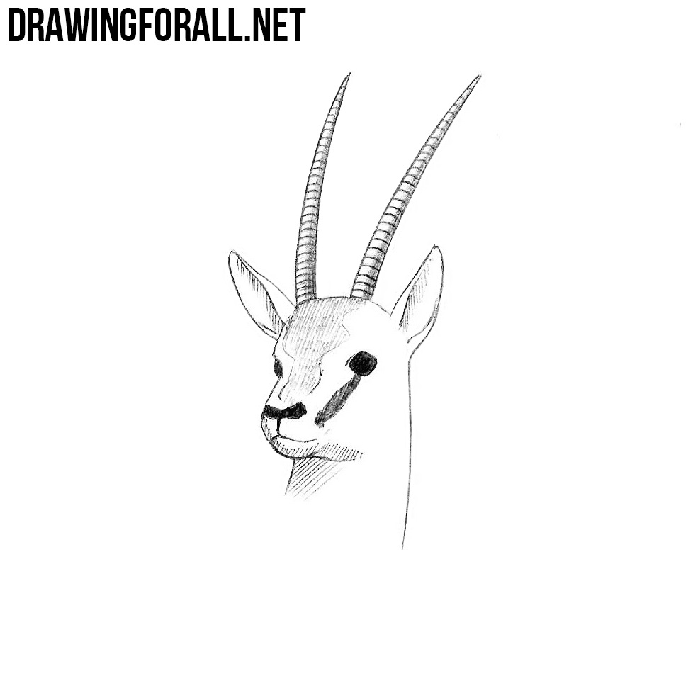How to Draw an Antelope Head | DrawingForAll.net