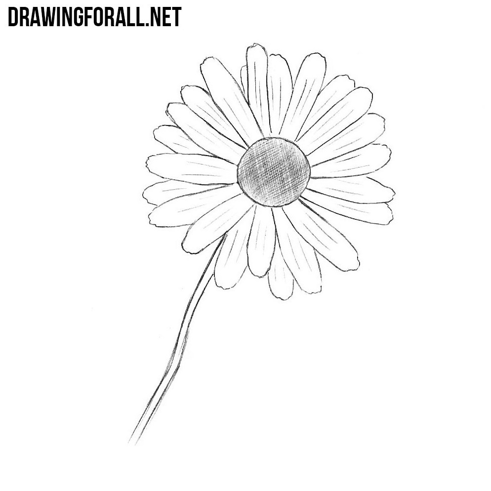 How to draw a flower in stages 41