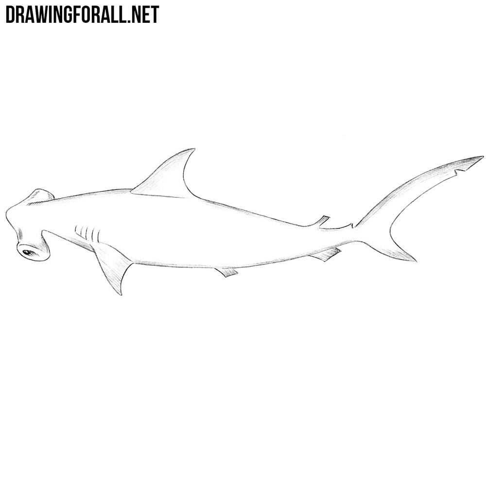 Uncategorized Hammerhead Shark Drawing how to draw a hammerhead shark drawingforall net