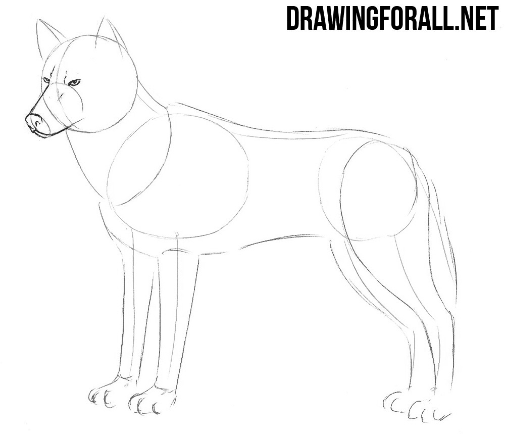 how to draw realistic wolf step by step