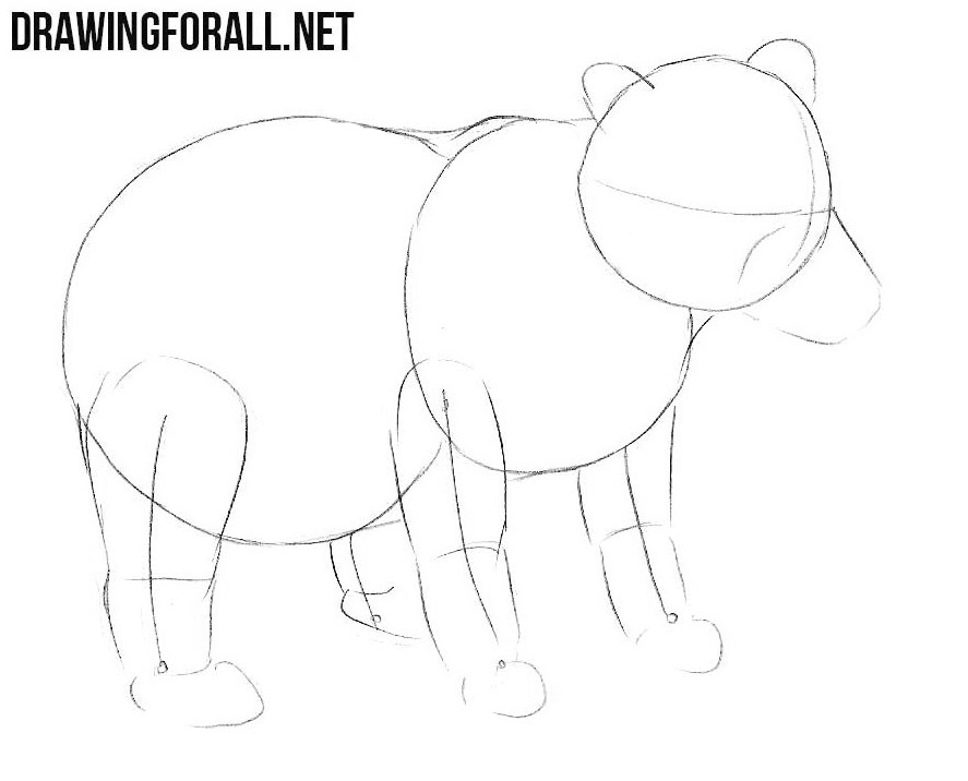 Learn to Draw a Baby Bear step by step