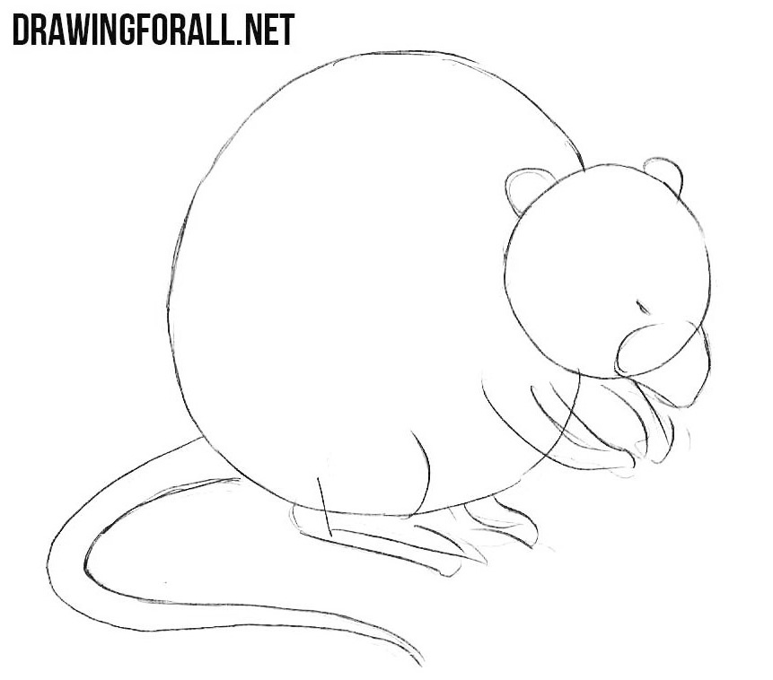 learn How to Draw a Muskrat
